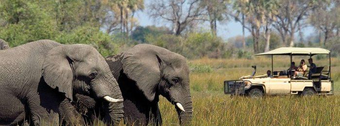 Фото и видеооператор в Ботсвану
