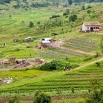 Фото и видеооператор в Руанду